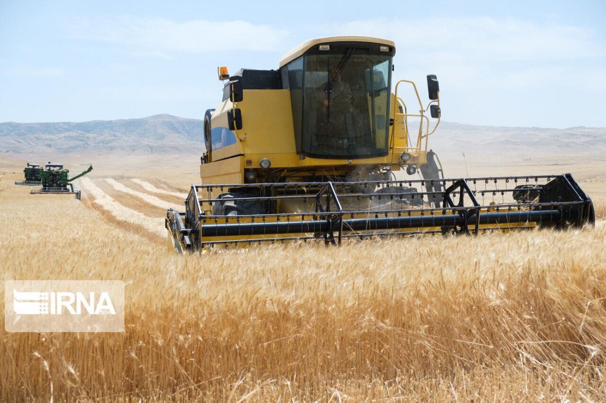 خبرنگاران محصول گندم مزارع دیم استان اردبیل 30 درصد کاهش یافت