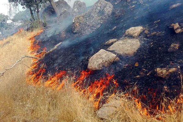 پیش روی سه روزه آتش در جنگل های اندیکا