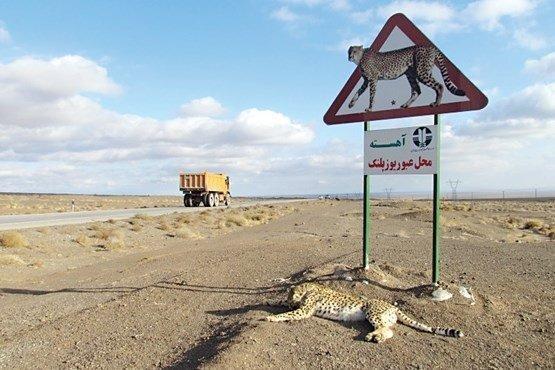 نصب تابلوی هشدار عبور حیوانات وحشی در راه های مواصلاتی زنجان