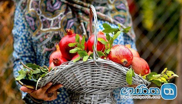 پیشگیری از ابتلا به کرونا با میوه بهشتی