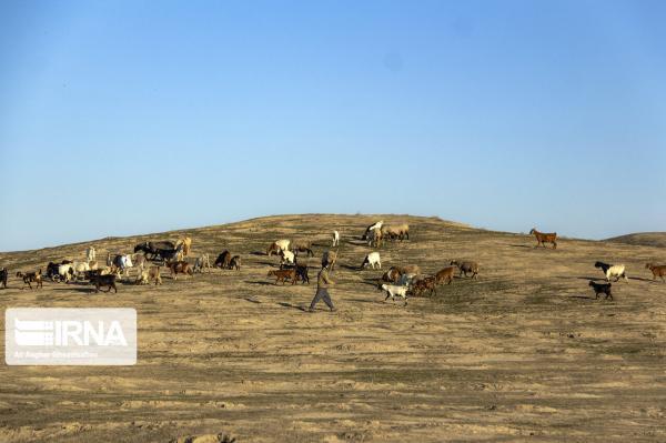خبرنگاران یکهزار و 200 تن جو برای دام عشایر مرز بین ایلام و لرستان توزیع شد