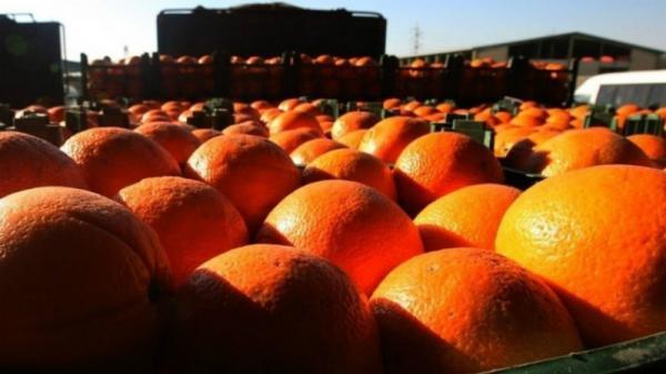وزارت صنعت: میوه های دپو شده مرتبط با طرح تنظیم بازار شب عید نبود