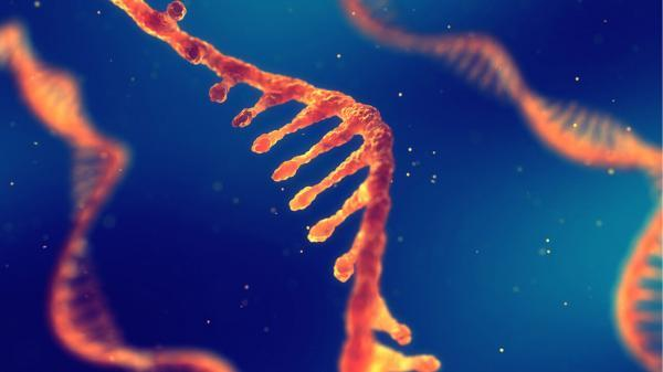 نانوذرات لیپیدی عنصری موفقیت بخش در واکسن های ضدکرونا