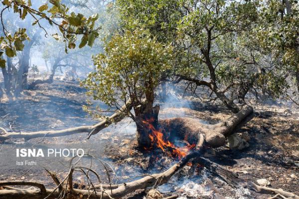 کُندی مهار آتش جنگل هاینارک گچساران، نیازمند اعزام نیروی های تخصصی هستیم