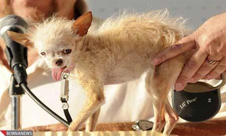 زشت ترین سگ جهان را اینجا ببینید